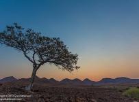 GrantAtkinson-Damaraland-_MG_1385