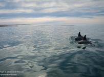 GrantAtkinson-WildCoast-TwinDolphins_0634odp