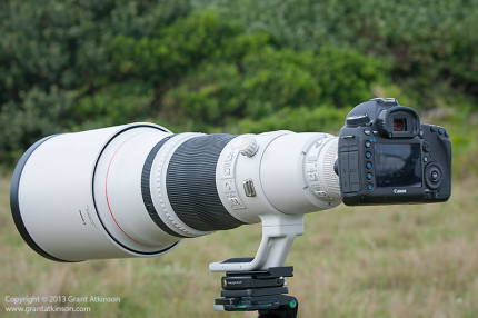 Canon EF 600 f4 L IS ii with Canon 5Dmk3