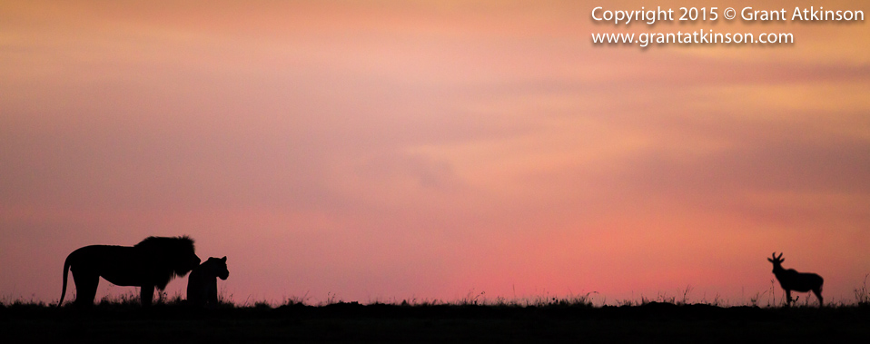 Mara Lion skyline