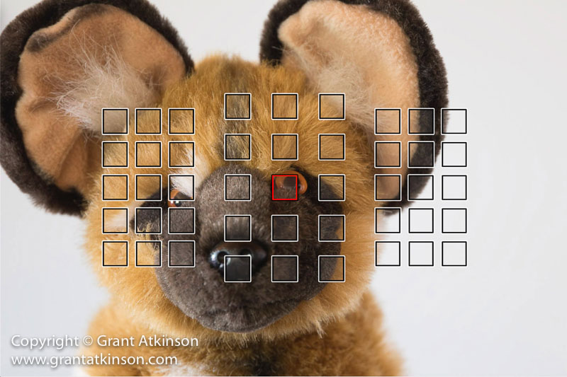 grant-atkinson-2
