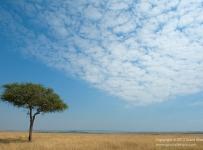 GrantAtkinson-Nkorombo_H011641