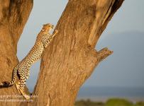 Grant-Atkinson-Amboseli_U9A0518_0026