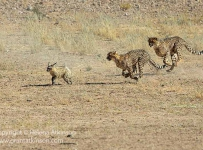 HelenaAtkinson_Kalahari-6420
