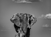 Grant-Atkinson-Amboseli_U9A0142_0055