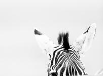 HelenaAtkinson_Tanzania-3820-Edit