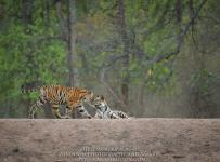 HelenaAtkinson_Bandhavgarh-1239