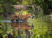 HelenaAtkinson_Bandhavgarh-2206-2