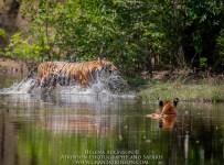 HelenaAtkinson_Bandhavgarh-2254