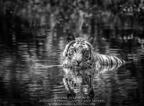 HelenaAtkinson_Bandhavgarh-3174-Edit-Edit-2