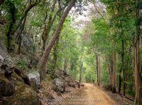 HelenaAtkinson_Bandhavgarh-3380