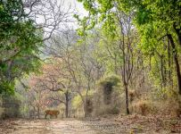 HelenaAtkinson_Bandhavgarh-3400