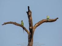 HelenaAtkinson_Bandhavgarh-3588