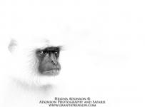 HelenaAtkinson_Bandhavgarh-3757