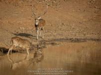 HelenaAtkinson_Bandhavgarh-3771