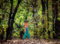 HelenaAtkinson_Bandhavgarh-4300