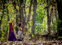 HelenaAtkinson_Bandhavgarh-4319