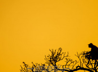 HelenaAtkinson_Bandhavgarh-4465