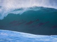 GrantAtkinson-WildCoast-Bottlenose-Surf_9385odp