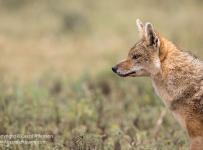 Grant-Atkinson-Ngorongoro--20180221_16381