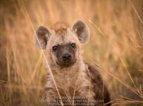 HelenaAtkinson_Botswana-