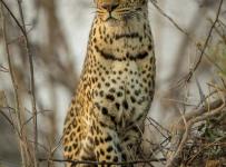 HelenaAtkinson_Botswana-3963-Edit