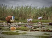 HelenaAtkinson_Botswana-8736