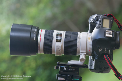 Canon EF 70-200 f4 L IS on tripod with lens collar.  Click for larger view