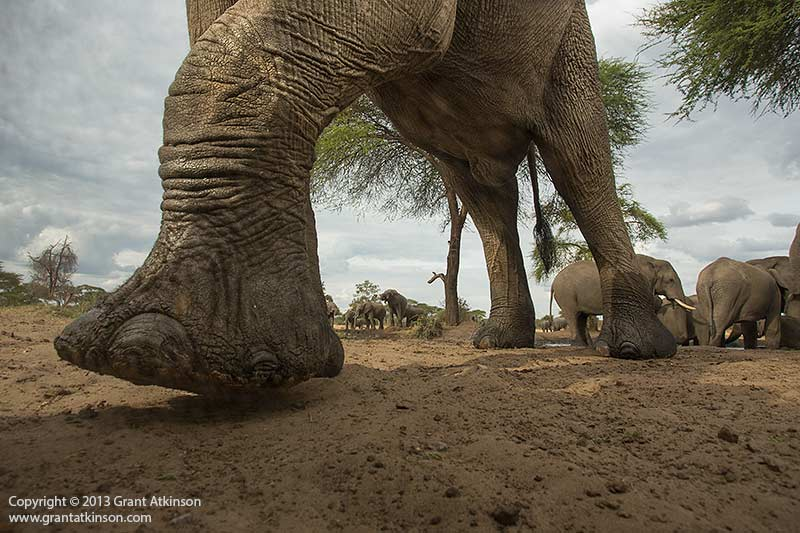 Bull elephant walking by, up close. Canon 5Dmk3, Canon EF 17-40 L f4. Shutter speed 1/500 sec at f8, Iso 500. Plus 0.33 Exposure compensation.