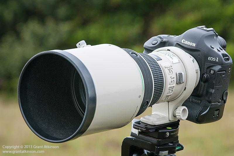 Canon EF 400 DO f4 IS lens on a Canon 1Dmk4 body.