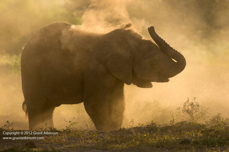 Canon EF 400 DO IS and Canon 5Dmk3. African elephant. 1/4000sec at f5.6, Iso 800
