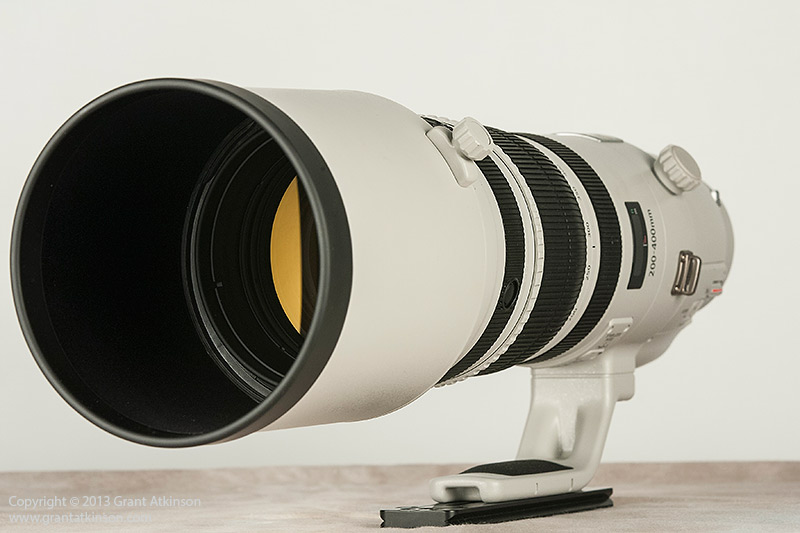 Canon EF 200-400 f4L IS USM 1.4x extender. Click for larger view