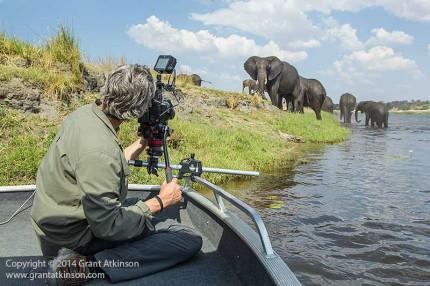 Filming African elephant, Chobe River, Botswana, using a Chobe Savanna Lodge boat.