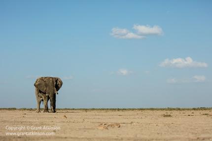 Grant-Atkinson-Amboseli_U9A0130_0043