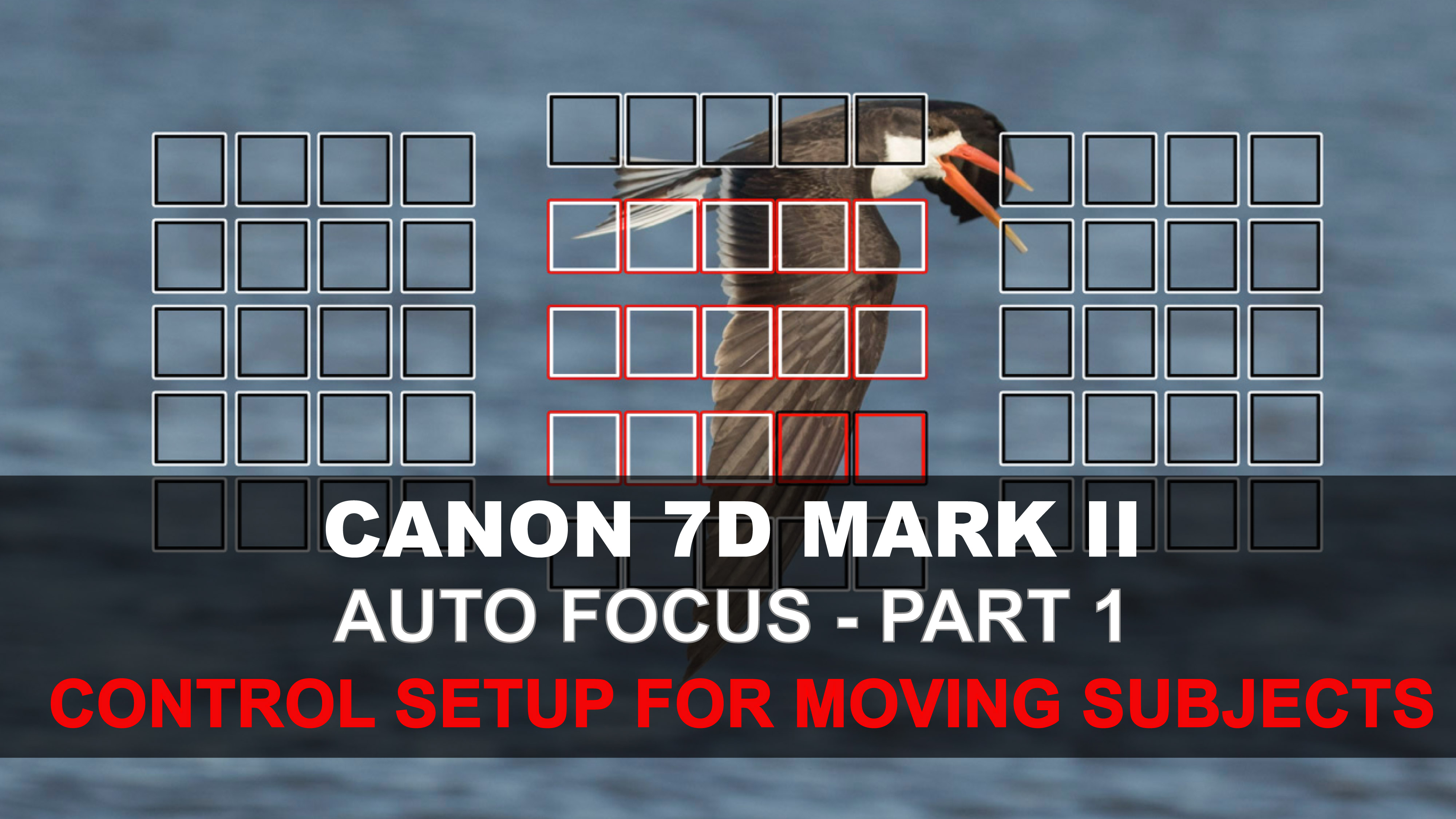 Canon 7d mark ii auto focus pt 1 setting up the camera controls.