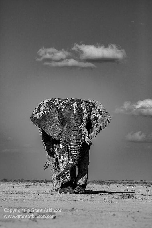 Grant-Atkinson-Amboseli_U9A0142_0055-2