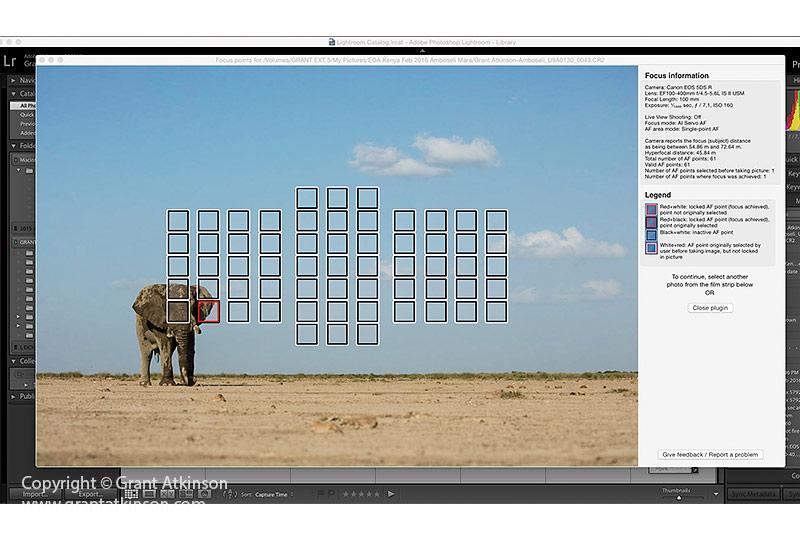 GrantAtkinson-Amboseli-2