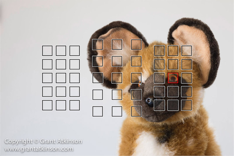 grant-atkinson-5