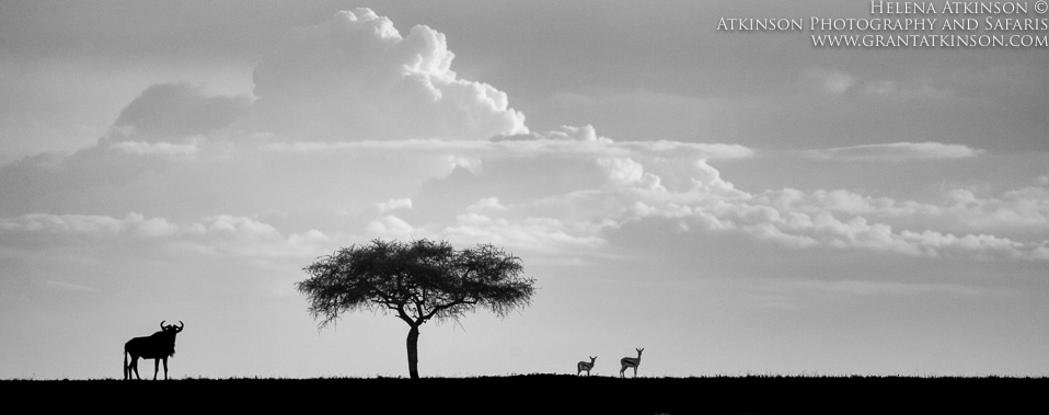 Kenya skies