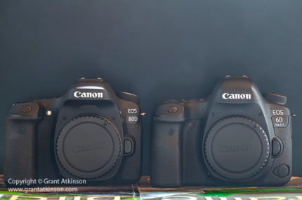 6D Mark II, 5D Mark IV, 7D Mark II or 80D, which Mid-range Canon