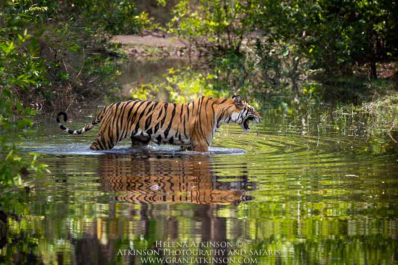 Magical Bandhavgarh, India - May (departure 1)