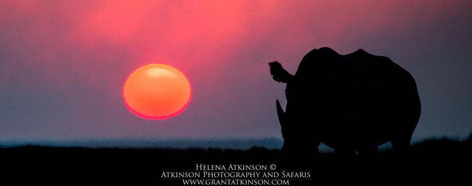 Rhino at sunset, Botswana